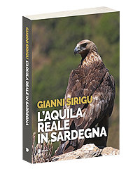 laquila-reale-in-sardegna-2.png